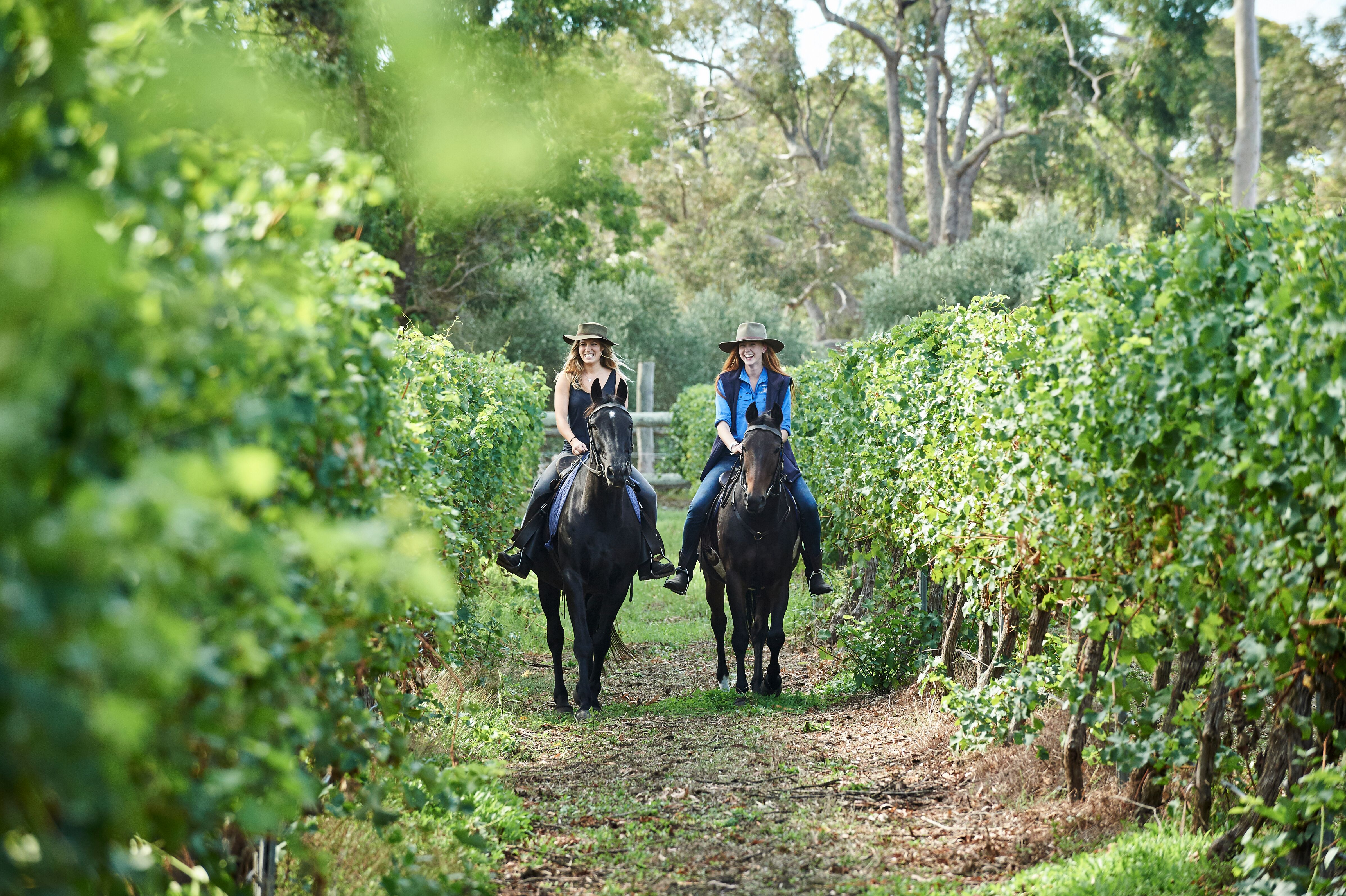 Where To Take A Horse Riding Adventure In South West Wa