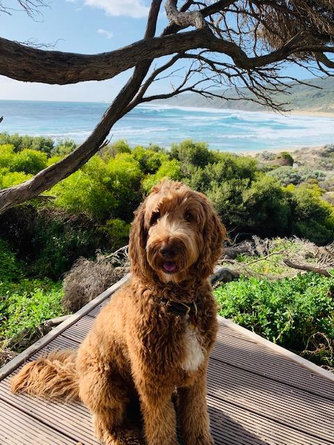 Dog walking available at Yallingup beach