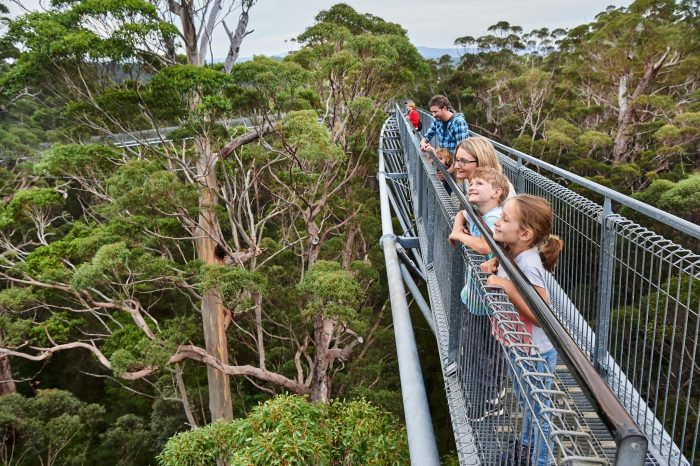 Valley of the Giants Treetop Walk. Image by @francesandrjich