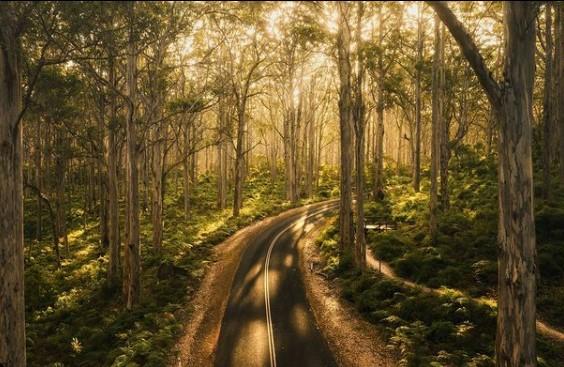 Boranup Forest @hamishstubbs