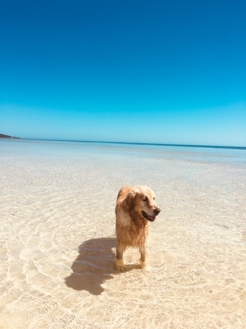 Larry stayed at Nikabel and loved his swims along the Dunsborough foreshore